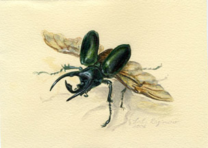 Atlas beetle watercolour and gouache painting by Lala Ragimov