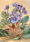 african violets watercolor and gouache painting by Lala Ragimov